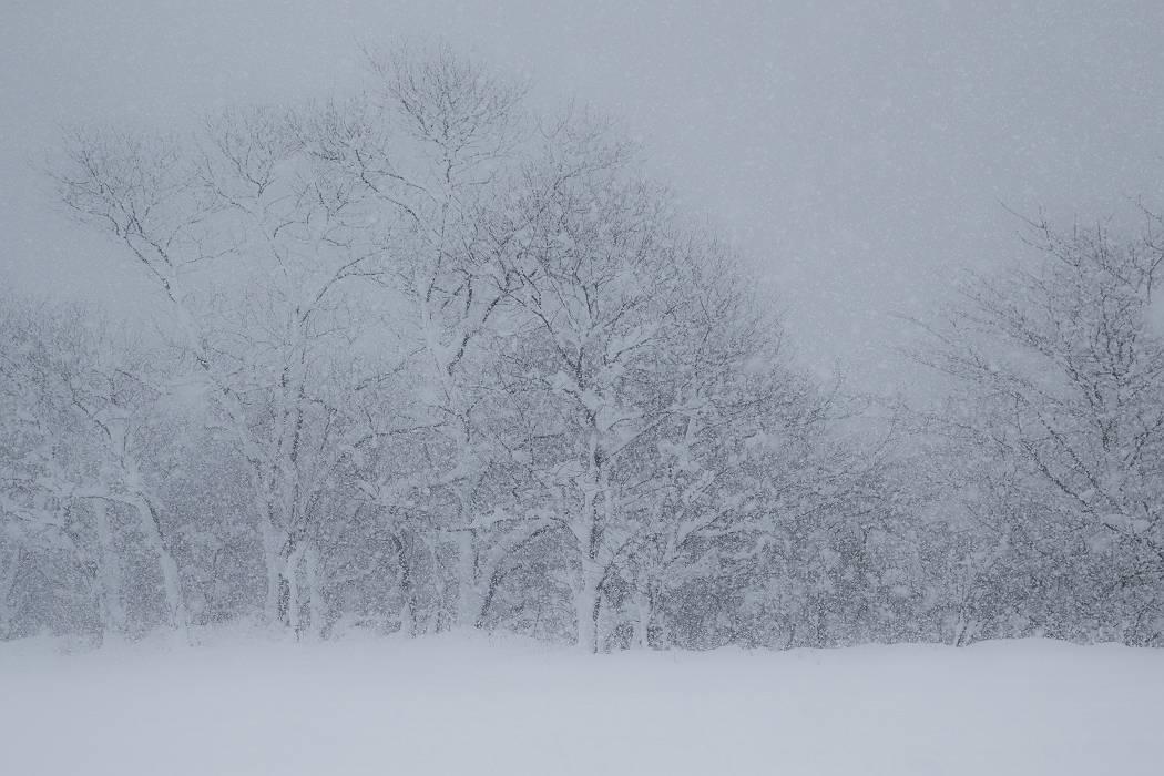 雪は降る_c0077395_15430560.jpg