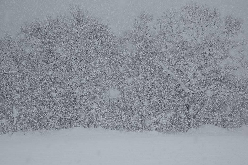 雪は降る_c0077395_15432455.jpg