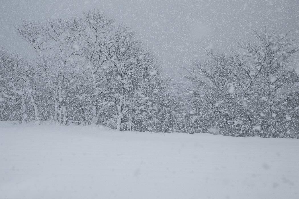 雪は降る_c0077395_15434048.jpg
