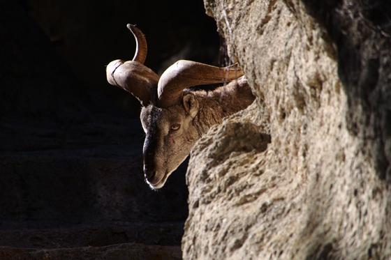岩の陰からチラリ_b0016600_2340481.jpg