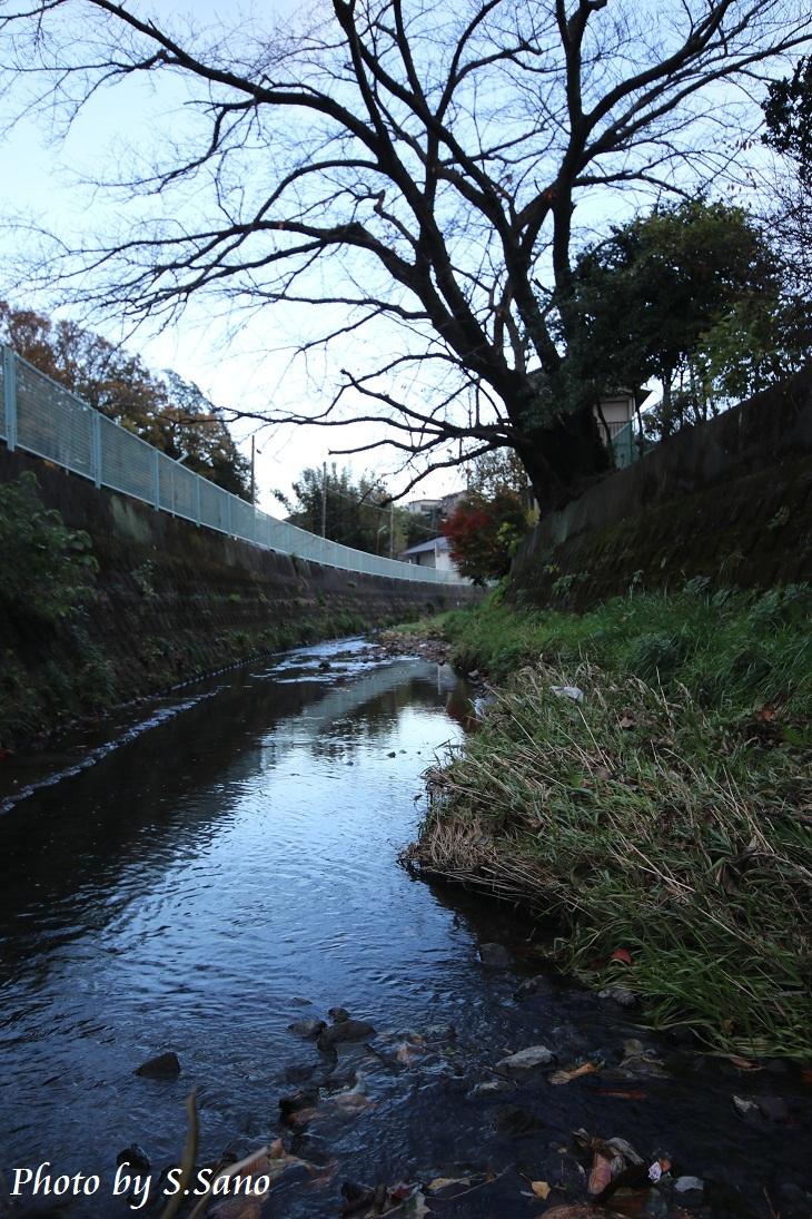 侍従川を散歩_b0348205_22390135.jpg