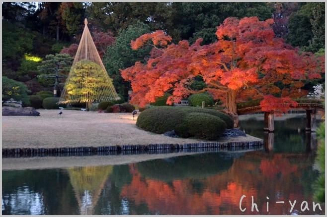 六義園 「紅葉と大名庭園のライトアップ」_e0219011_13475311.jpg