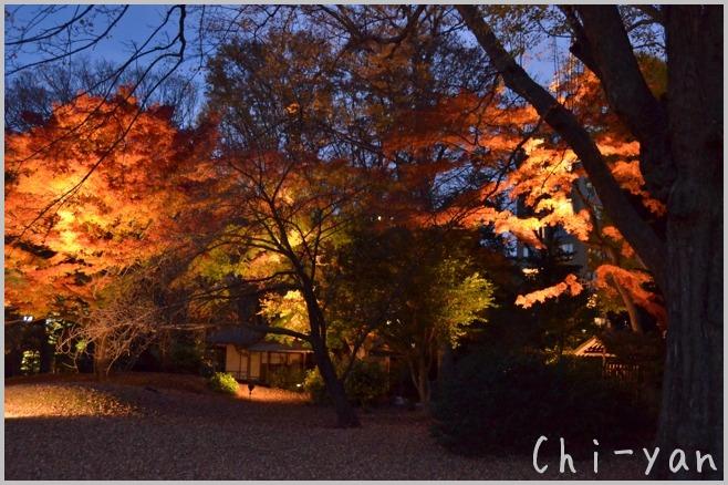 六義園 「紅葉と大名庭園のライトアップ」_e0219011_13483453.jpg