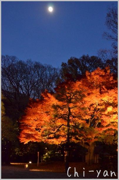 六義園 「紅葉と大名庭園のライトアップ」_e0219011_13484288.jpg