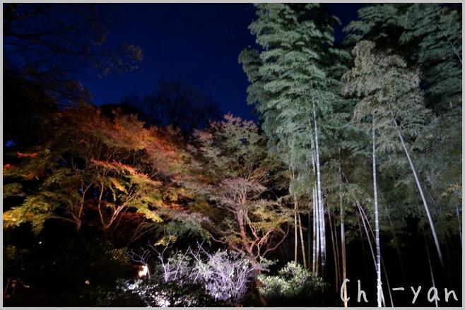 六義園 「紅葉と大名庭園のライトアップ」_e0219011_1349619.jpg