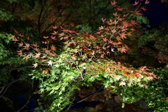 六義園 「紅葉と大名庭園のライトアップ」_e0219011_13544364.jpg