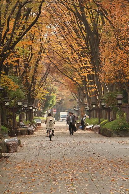 '14 氷川参道 & 大宮公園 紅葉散歩_d0150720_1005594.jpg