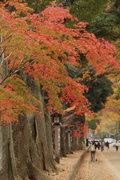 '14 氷川参道 & 大宮公園 紅葉散歩_d0150720_101149.jpg