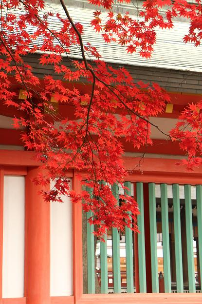 '14 氷川参道 & 大宮公園 紅葉散歩_d0150720_1021396.jpg