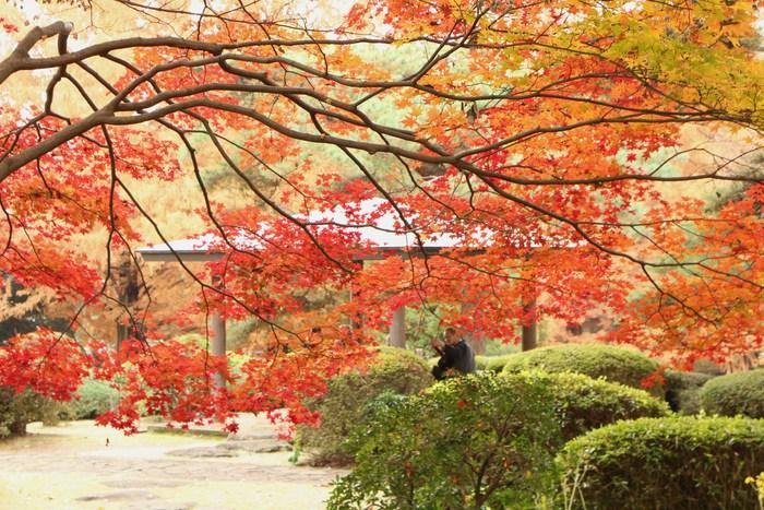 '14 氷川参道 & 大宮公園 紅葉散歩_d0150720_1032629.jpg