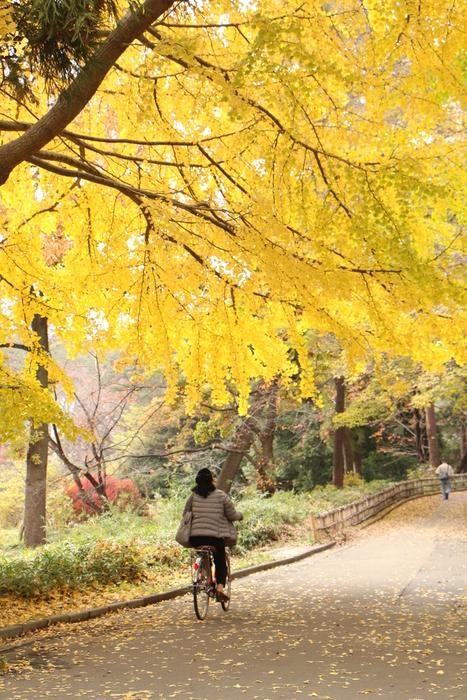 '14 氷川参道 & 大宮公園 紅葉散歩_d0150720_1035986.jpg