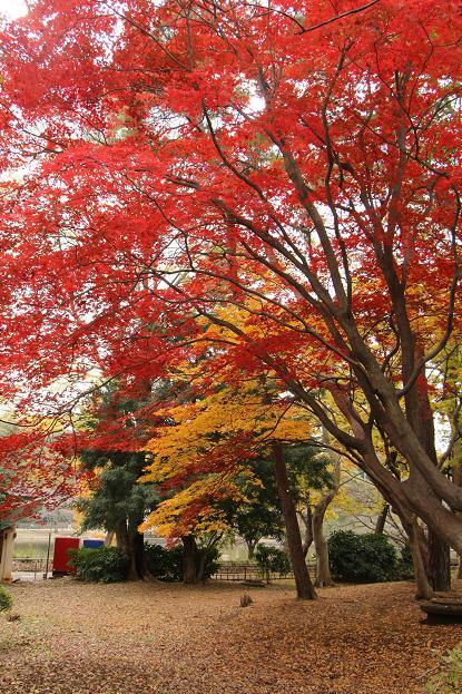 '14 氷川参道 & 大宮公園 紅葉散歩_d0150720_1044966.jpg