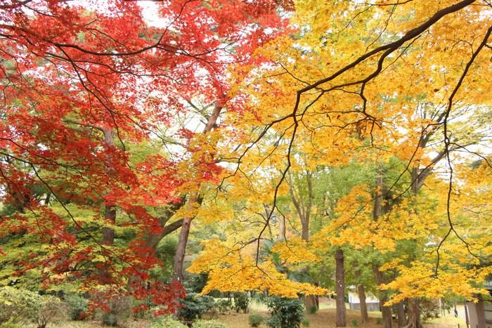 '14 氷川参道 & 大宮公園 紅葉散歩_d0150720_1051677.jpg