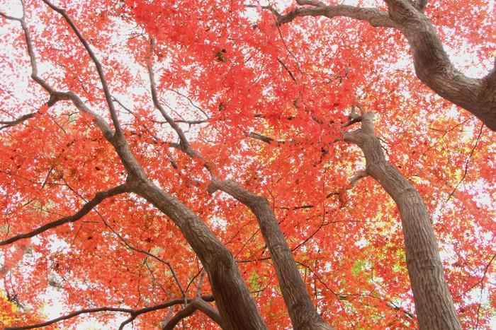 '14 氷川参道 & 大宮公園 紅葉散歩_d0150720_1054370.jpg