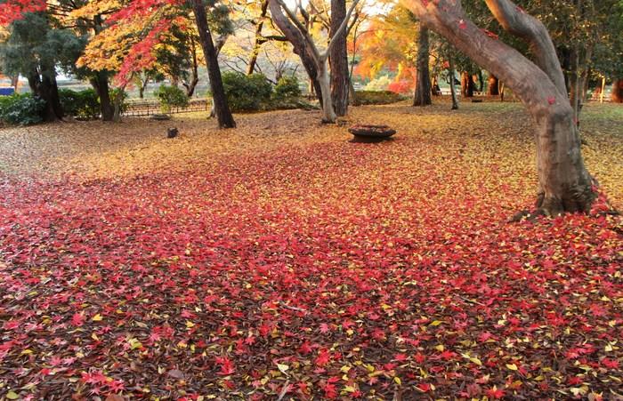 '14 氷川参道 & 大宮公園 紅葉散歩_d0150720_1084051.jpg