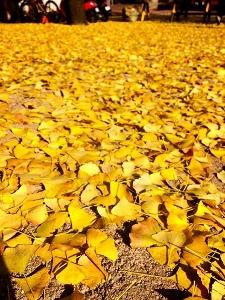 ソウルの秋から冬♪_c0139321_17384816.jpg