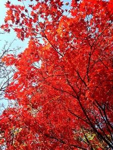 ソウルの秋から冬♪_c0139321_17394188.jpg