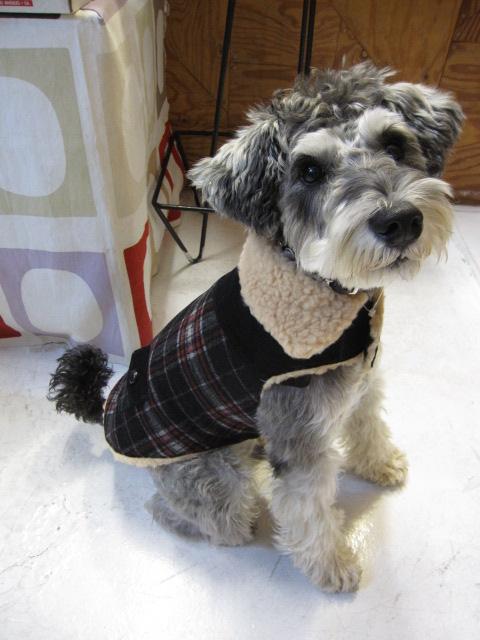 Wool ボア付きコート&チャンキータートルセーター  モデルはライス君♪_c0151934_011071.jpg