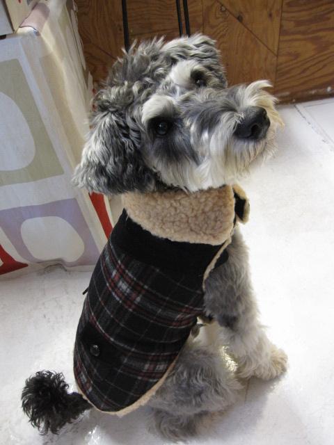 Wool ボア付きコート&チャンキータートルセーター  モデルはライス君♪_c0151934_013354.jpg