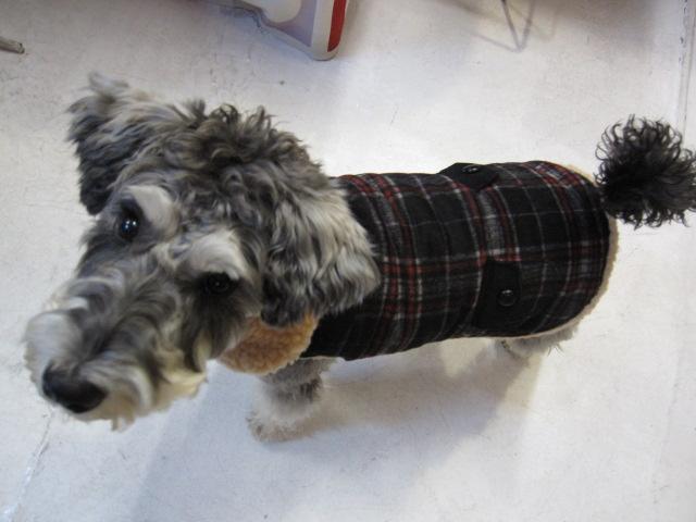 Wool ボア付きコート&チャンキータートルセーター  モデルはライス君♪_c0151934_015756.jpg