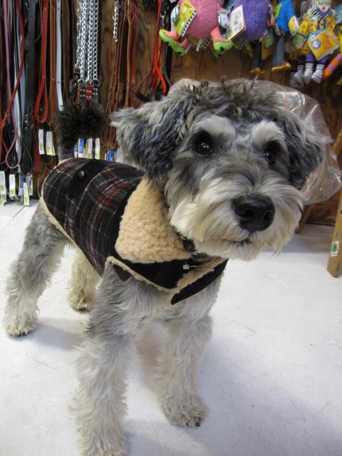 Wool ボア付きコート&チャンキータートルセーター  モデルはライス君♪_c0151934_03050.jpg