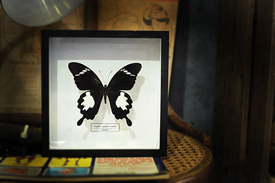 蝶の標本_f0247848_1422429.jpg