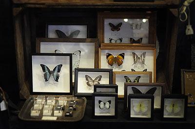 蝶の標本_f0247848_142914.jpg