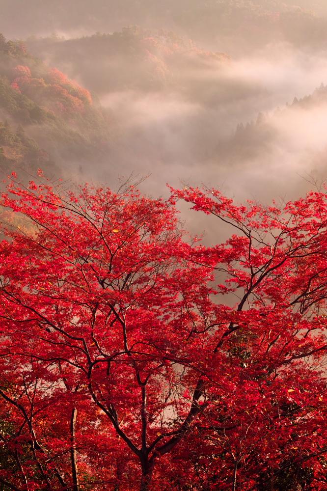 紅葉  2014    <吉野山>                          _f0021869_2353270.jpg