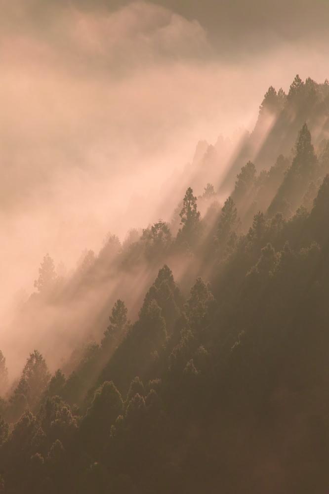 紅葉  2014    <吉野山>                          _f0021869_2362256.jpg