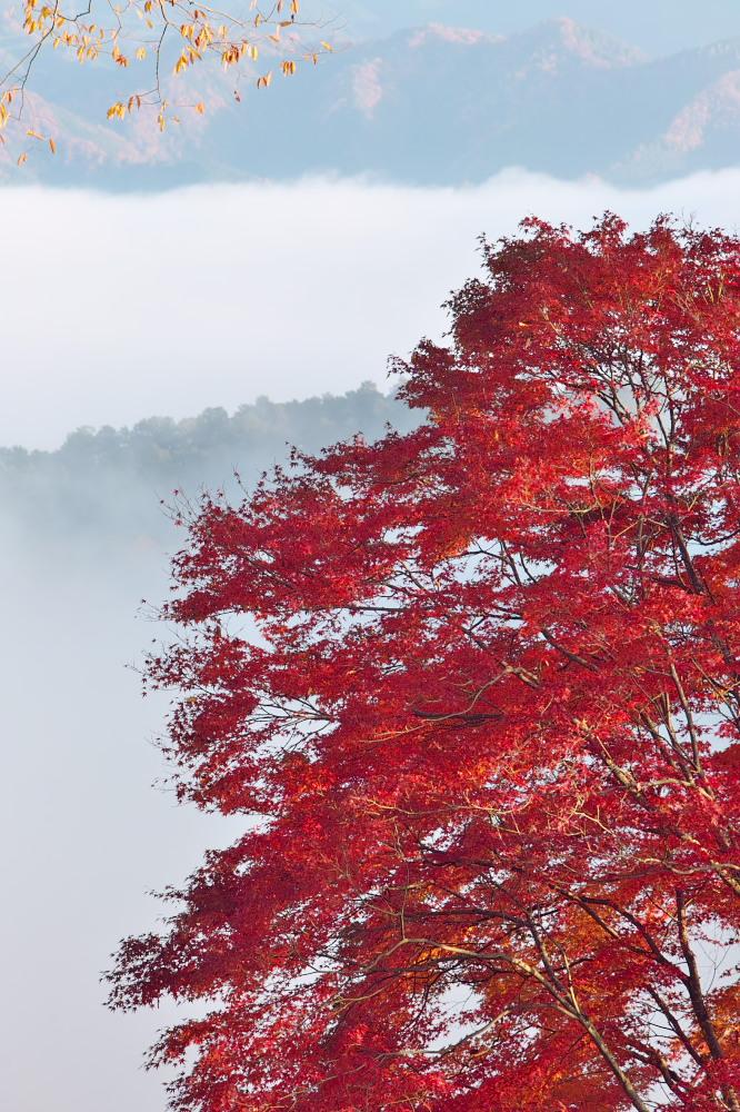 紅葉  2014    <吉野山>                          _f0021869_2363297.jpg