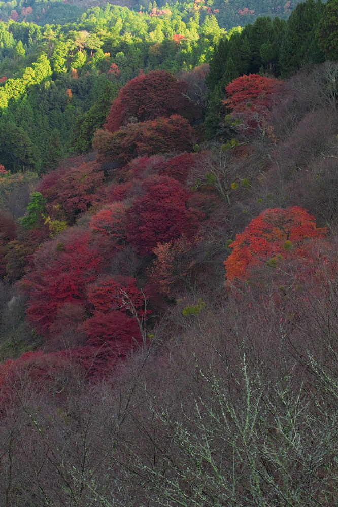 紅葉  2014    <吉野山>                          _f0021869_2365127.jpg