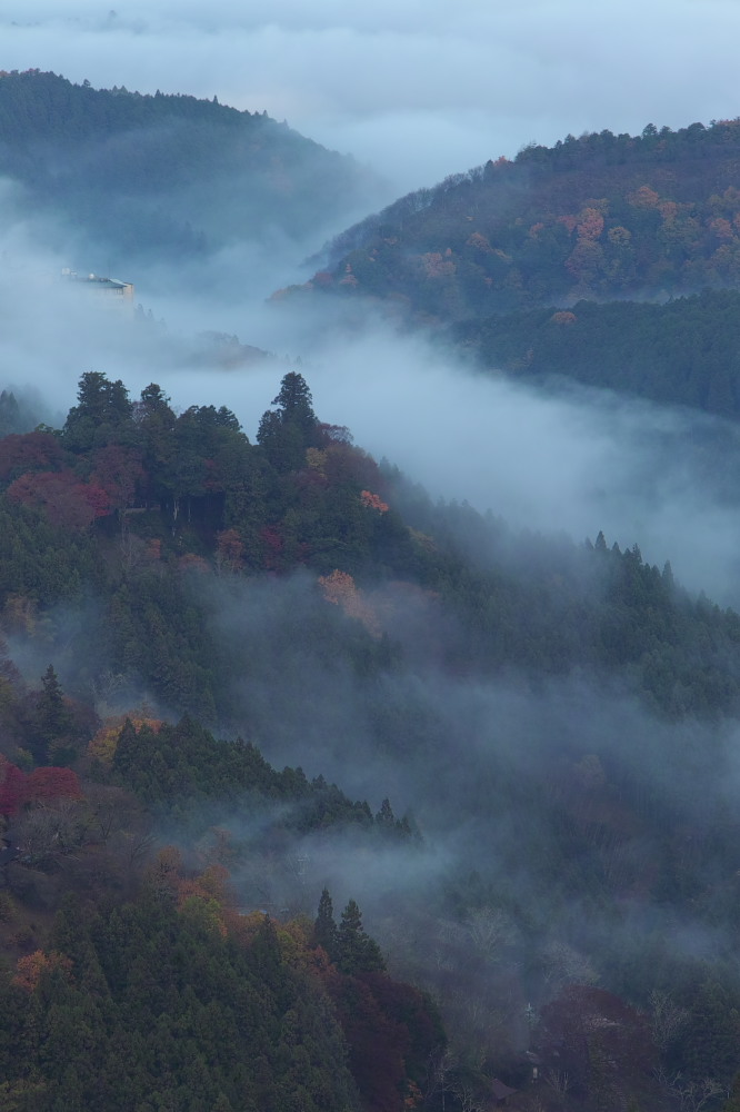 紅葉  2014    <吉野山>                          _f0021869_2373882.jpg