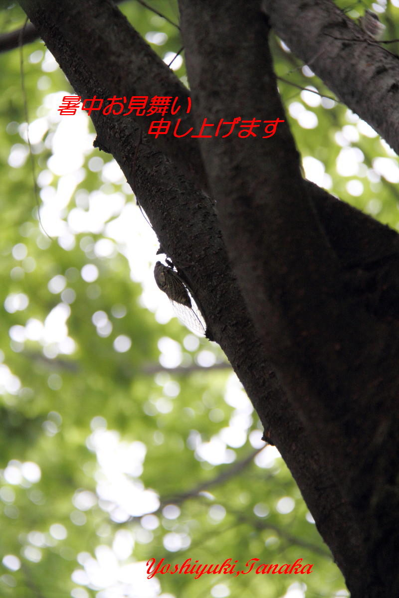 a0325492_08200420.jpg