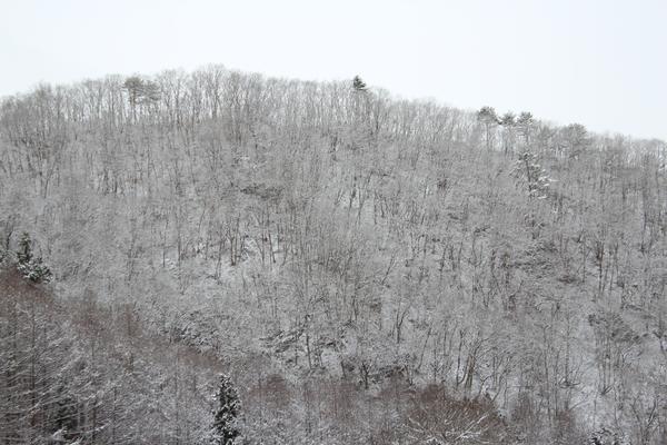 現在の雪の状況_f0227395_104351.jpg
