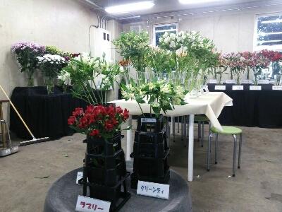 アルストロメリア品種展示in川崎_d0062298_2214187.jpg