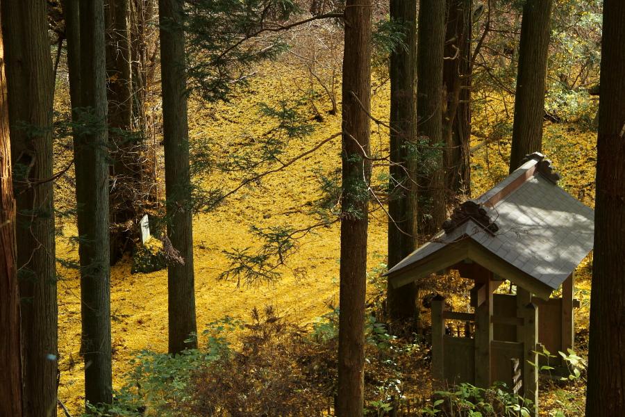 黄色い地面_b0190710_21232998.jpg