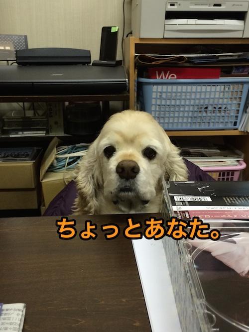 b0067012_115064.jpg