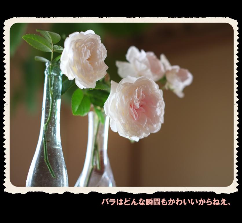 b0344119_19331734.jpg