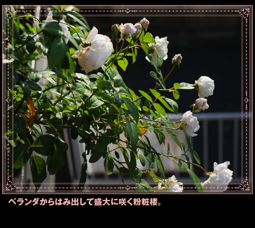 b0344119_19332313.jpg