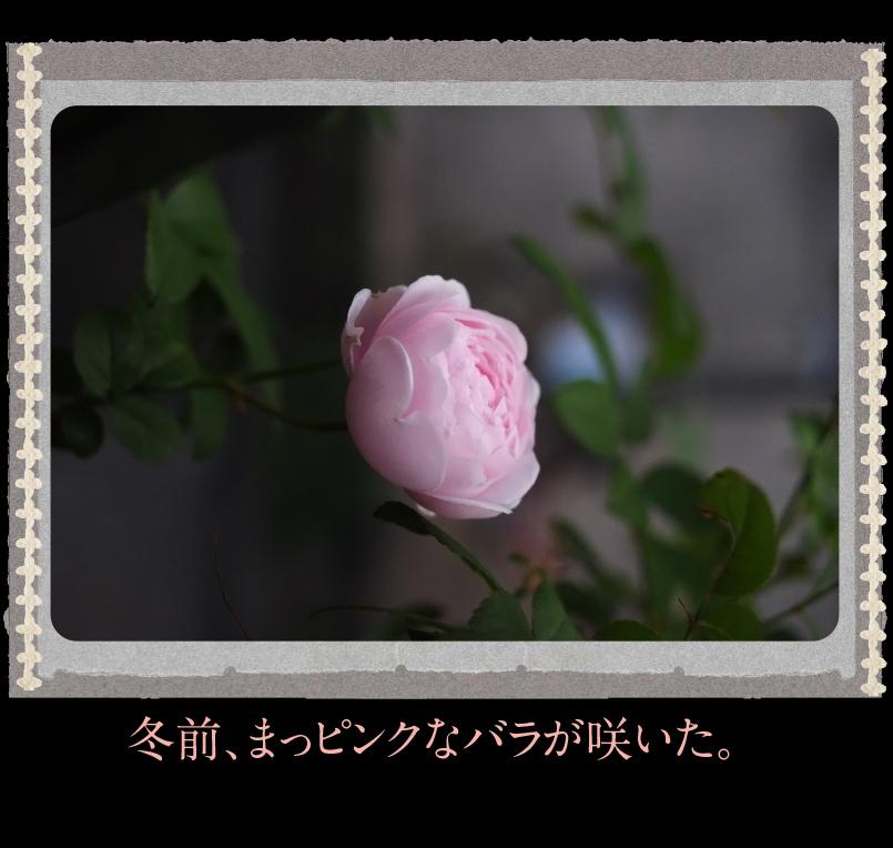 b0344119_19334350.jpg