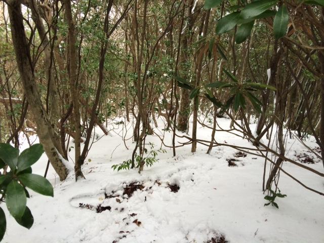 初雪の山_b0161750_21211082.jpg