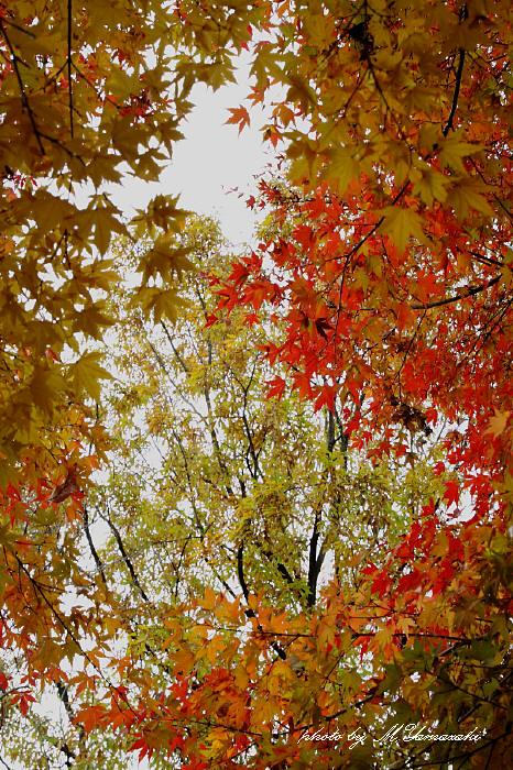 紅葉とアリスイ_c0217255_13142885.jpg