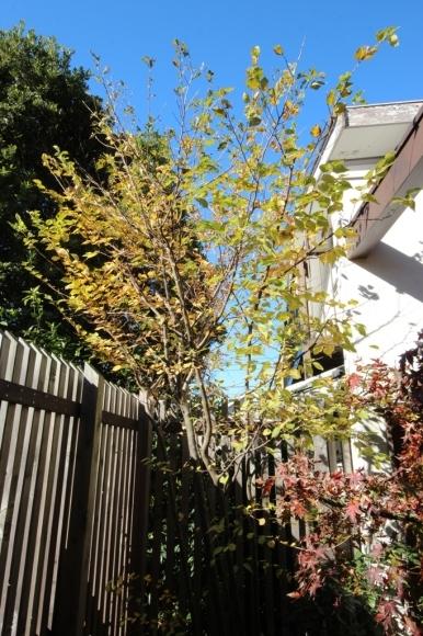紅葉の庭で_c0310571_08264000.jpg