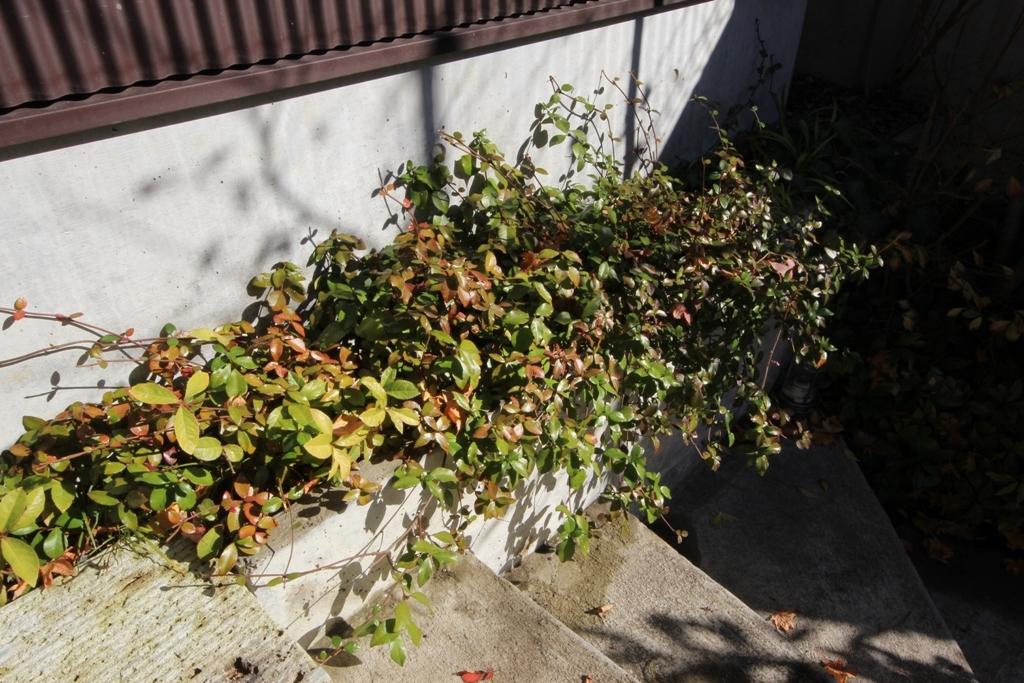 紅葉の庭で_c0310571_08282477.jpg