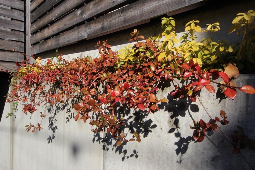 紅葉の庭で_c0310571_08294307.jpg