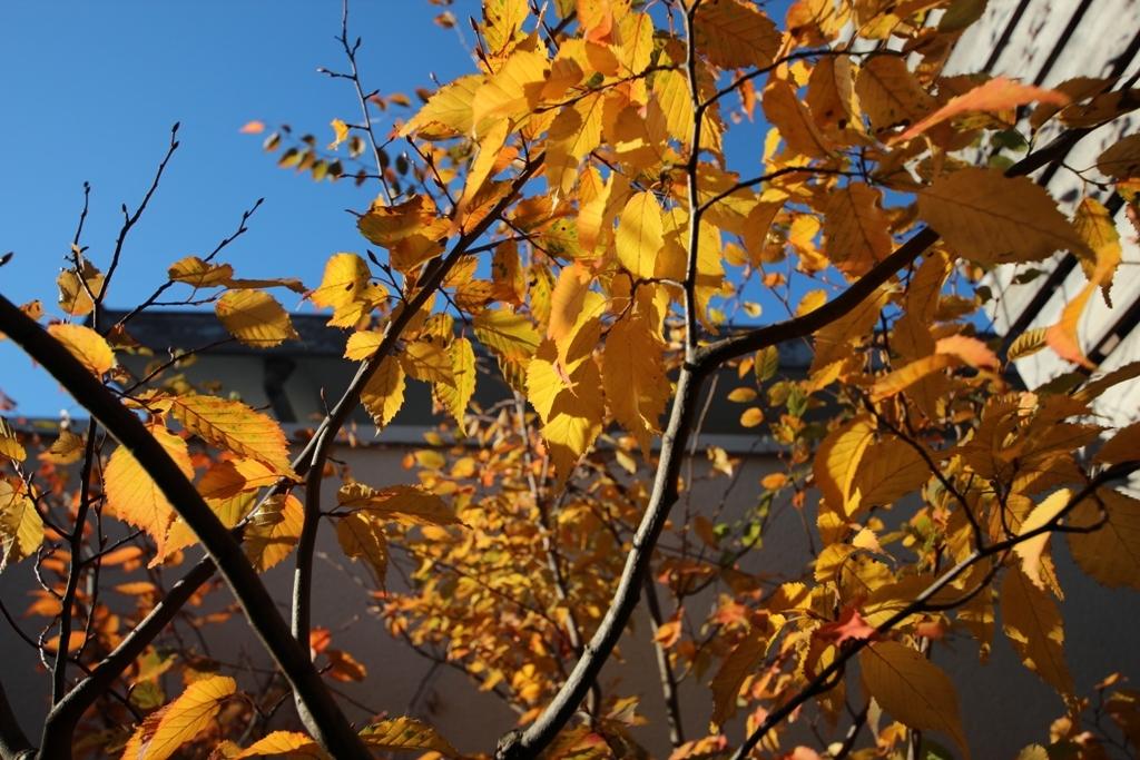 紅葉の庭で_c0310571_08310430.jpg