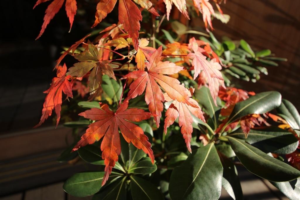 紅葉の庭で_c0310571_08314111.jpg