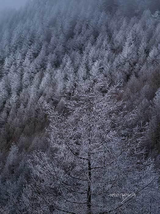 霧氷樹_c0085877_07162125.jpg
