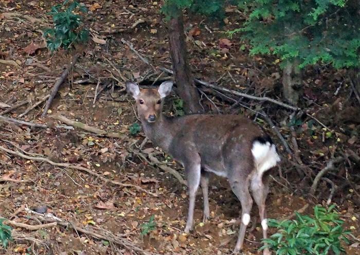 鹿の家族_e0016894_8564444.jpg