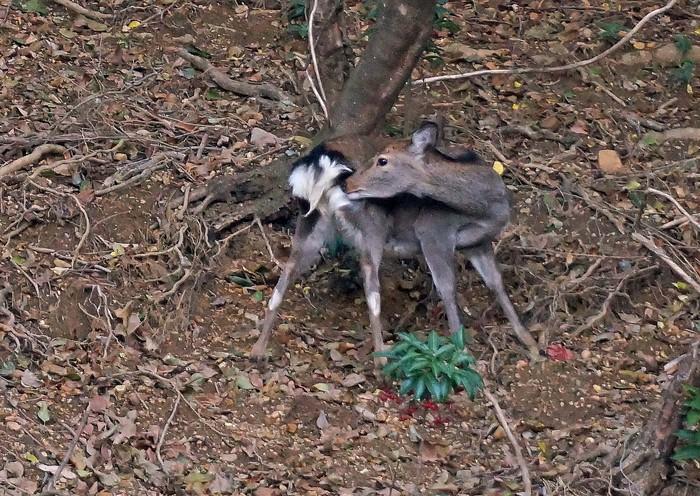 鹿の家族_e0016894_857077.jpg